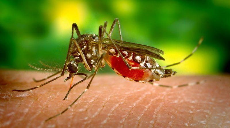 Perché Le Zanzare Pungono Solo Te