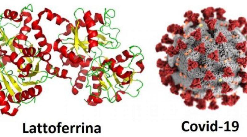 Covid-19 e lattoferrina: altri dati a conferma che la molecola è in grado di contenere gli effetti del virus