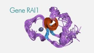 """FONDAZIONE JUST ITALIA sostiene la Ricerca e dona 300mila Euro alla Fondazione per la Ricerca Biomedica Avanzata VIMM di Padova per il Progetto sul ruolo del """"GENE RAI1"""" nelle patologie del neurosviluppo infantile"""