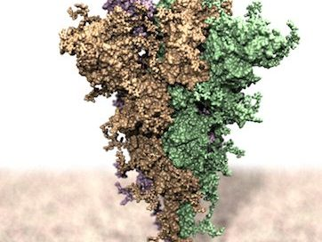 Studio UNITS – effetti varianti COVID su interazione anticorpi monoclonali