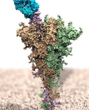 Studio UNITS - effetti varianti COVID su interazione anticorpi monoclonali